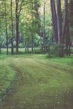 de donkere weg van de grintweg in avondbos - de uitstekende film ziet eruit Royalty-vrije Stock Fotografie