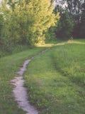 de donkere weg van de grintweg in avondbos - de uitstekende film ziet eruit Stock Foto