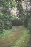 de donkere weg van de grintweg in avondbos - de uitstekende film ziet eruit Stock Afbeelding