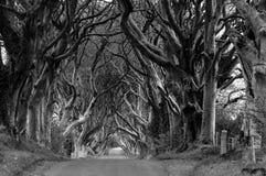 De donkere zwart-wit Hagen - Royalty-vrije Stock Afbeeldingen