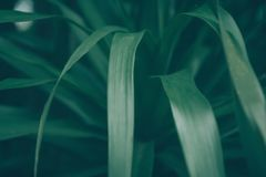 De donkergroene achtergrond van de bladerenaard Royalty-vrije Stock Foto's