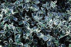 De donkergroene achtergrond van de bladtuin Mooi natuurlijk, abstract geweven bannerontwerp Royalty-vrije Stock Afbeeldingen