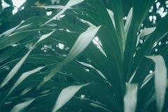De donkergroene bladerenaard ontspant behangachtergrond Royalty-vrije Stock Afbeeldingen