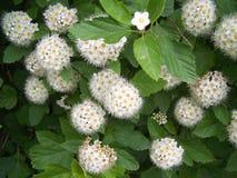 De donkergroene bloemen van wildernis namen toe Stock Afbeelding