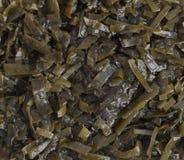 De donkergroene Hoogste Mening van de Zeewiersalade Stock Fotografie