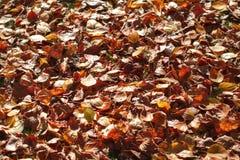 De donkeroranje gevallen achtergrond van de herfstbladeren Stock Foto's