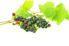 De donkerrode bos van de wijndruif met bladeren op witte achtergrond Stock Foto