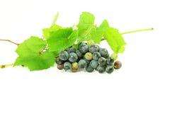 De donkerrode bos van de wijndruif met bladeren op witte achtergrond Royalty-vrije Stock Foto