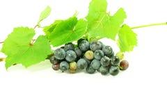 De donkerrode bos van de wijndruif met bladeren op witte achtergrond Stock Afbeelding