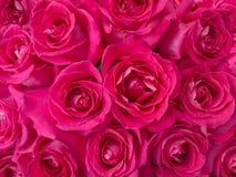 De donkerroze achtergrond van het rozenboeket Royalty-vrije Stock Fotografie