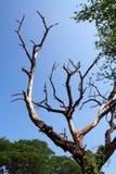 De dood van de boom Stock Foto's
