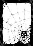 De dood van de spin Stock Fotografie