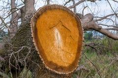 De dood van een boom Stock Afbeelding