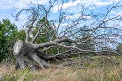 De dood van een boom Stock Foto
