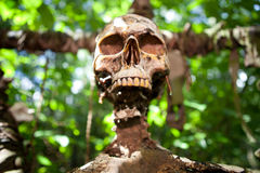 De dood van het de schedeloffer van het skelet Stock Foto's