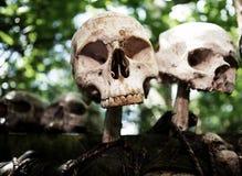 De dood van het de schedeloffer van het skelet Stock Afbeeldingen