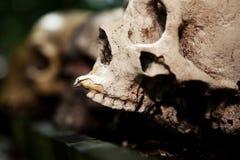 De dood van het de schedeloffer van het skelet Royalty-vrije Stock Foto's