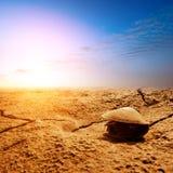 De dood van mosselen op het strand Royalty-vrije Stock Foto
