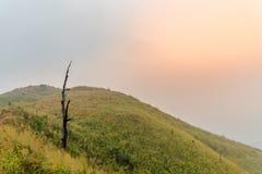De doodsboom op de heuvel werd behandeld door rook bosbrand bij sunseะ Royalty-vrije Stock Foto's
