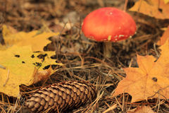 De doodsglb paddestoel en abscissed bladeren Stock Foto's