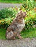 De doorhangende Hond zit aan Aandacht royalty-vrije stock foto's