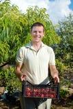 De doos van de jonge mensenholding met tomaten Royalty-vrije Stock Foto's