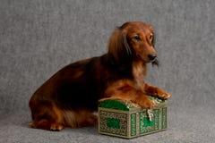 De doos van de tekkel en van de schat Stock Foto's