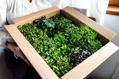 De doos van de vrouwenholding greens Royalty-vrije Stock Afbeeldingen