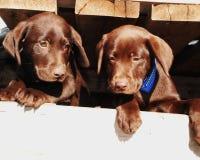 De Doos van het puppy Royalty-vrije Stock Afbeeldingen