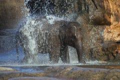 De douche van de olifant Stock Afbeeldingen