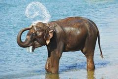 De douche van de olifant stock foto