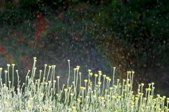 De Douches van de tuin Royalty-vrije Stock Fotografie