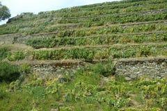 De Douro-Valleiwijngaarden Stock Fotografie