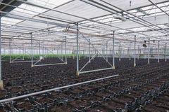 De dozen met grond op het planten wordt voorbereid die Royalty-vrije Stock Fotografie