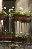 De dozentaormina van de bloem Royalty-vrije Stock Foto's