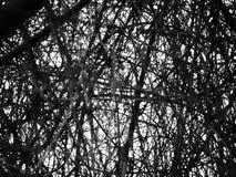 De draad-als structuur van een boom Royalty-vrije Stock Foto's