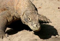 De Draak van Komodo royalty-vrije stock afbeeldingen