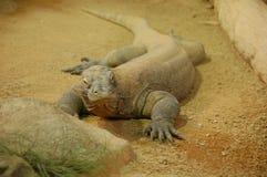 De draak van Komodo in dierentuin stock fotografie