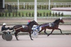De draf die van het paard de renbaan van Moskou rent Royalty-vrije Stock Afbeeldingen