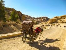 De dragende toeristen van een paardkar op stoffige weg bij zonsondergang in Petra, Jordanië Petra is één van de werelden grootste stock foto's