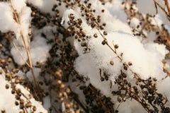 De dragon riep ook dragon onder sneeuw Stock Foto's
