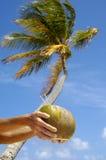 De drank van de kokosnoot Royalty-vrije Stock Foto