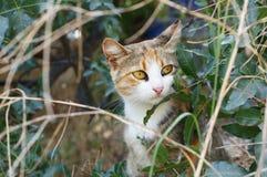 De drie-gekleurde kat zit in de struiken royalty-vrije stock afbeeldingen