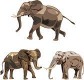 De drie soorten van de wereld olifanten Royalty-vrije Stock Afbeeldingen