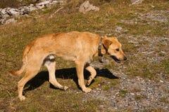 De droevige hond Royalty-vrije Stock Foto