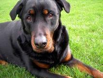 De droevige Hond van het Gezicht - ik voel Uw Pijn   royalty-vrije stock foto