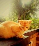 De droevige kat Stock Foto's