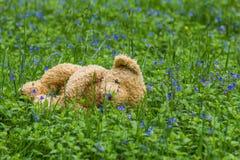 De droevige lente Verloren teddybeer in het bos royalty-vrije stock afbeeldingen