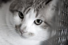 De droevige rode kattenrassen couperen in een kooi Stock Afbeelding