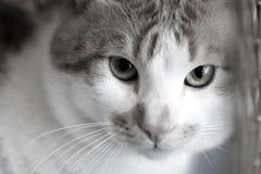 De droevige rode kattenrassen couperen in een kooi Stock Fotografie